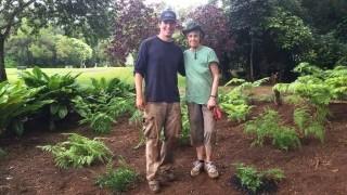 Fern's Garden_Kay Lynch