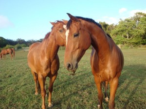 horsemanship002-min