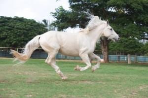 horsemanship003-min