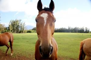 horsemanship004-min
