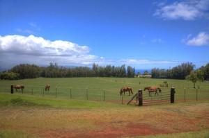 horsemanship005-min